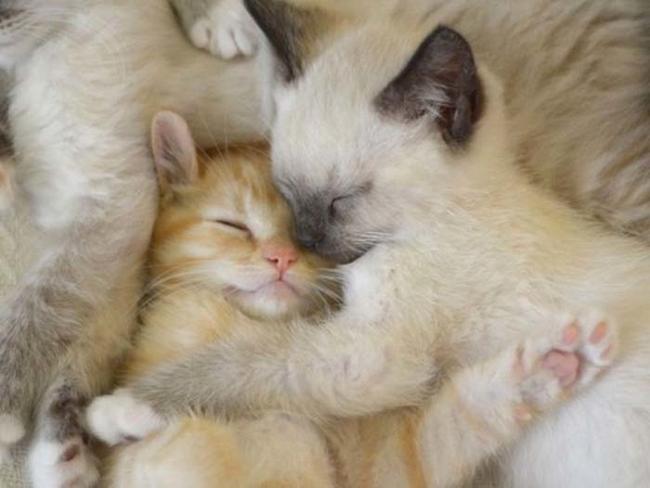 Oto 43 dowody na to, że zwierzęta też lubią się przytulać :)