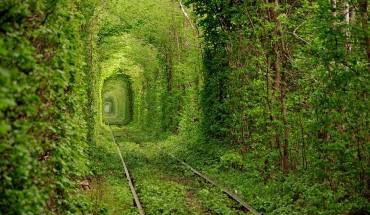 Magiczne ścieżki leśne są dowodem na to, że musimy chronić nasze środowisko.