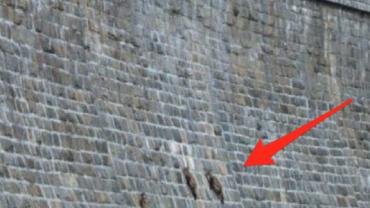 Fotograf zobaczył coś na ścianie budynku. Nie zgadniecie, co to… WOW!
