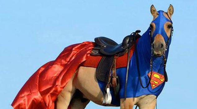 Konie w niecodziennym wydaniu! Przedstawiamy najbardziej zwariowane stylizacje!