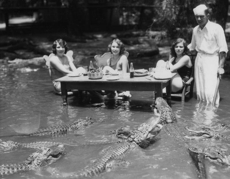krokodyle1