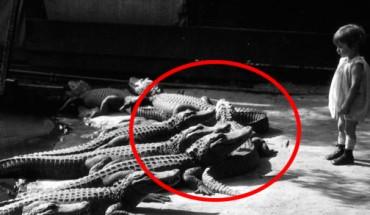 Te zdjęcia wyglądają na fotomontaż, ale są jak najbardziej prawdziwe. Zobacz, jak wyglądała farma aligatorów!