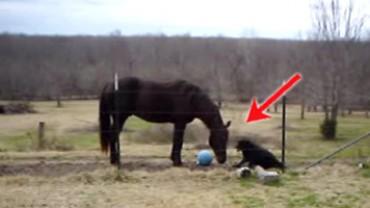 Te dwa zwierzaki mają wspólną pasję. Dowiedz się, jaką… To naprawdę urocze!