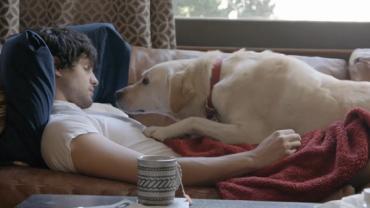 Labrador z reklamy Budweiser podbija internet! Koniecznie zobaczcie!