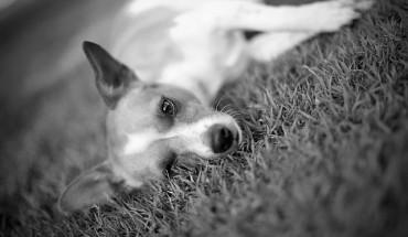 7 rzeczy, które powinien wiedzieć każdy właściciel psa