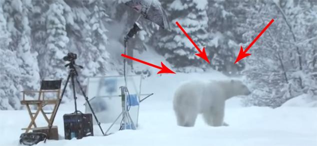 Skąd się biorą niedźwiedzie polarne?