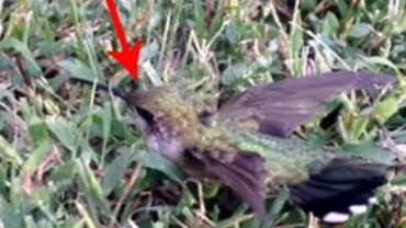 Koliber w pułapce z… gumy do żucia. Zanim następnym razem wyrzucisz gumę bez zastanowienia, pomyśl!