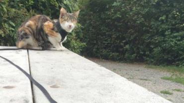 Nie mogłam uwierzyć, że ten kot tak dobrze chodzi na smyczy… potem zdałam sobie sprawę, że on… nie widzi!
