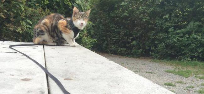 Nie mogłam uwierzyć, że ten kot tak dobrze chodzi na smyczy... potem zdałam sobie sprawę, że on... nie widzi!