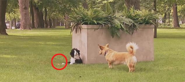 Zabawkowy pies atakuje prawdziwe psy. Ich reakcja miażdży!