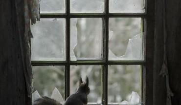 18 fantastycznych fotografii zwierząt patrzących przez okno. Cudowne! :)