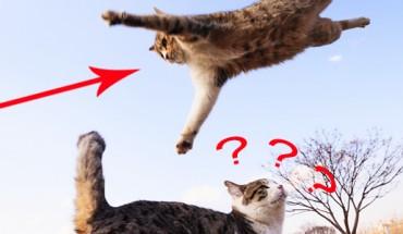 Latające koty! Przekonaj się, co potrafią te zwierzęta…