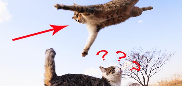 Latające koty! Przekonaj się, co potrafią te zwierzęta...