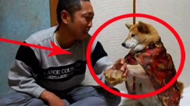 Mieć takiego psa… bezcenne! Uśmiech gwarantowany!