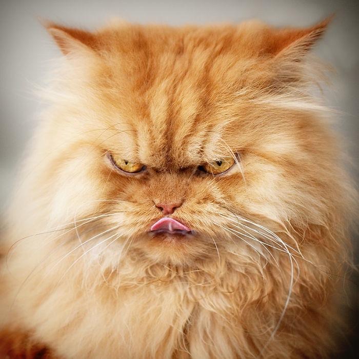 Garfi - najbardziej rozgniewany kot, jakiego kiedykolwiek widziałeś!