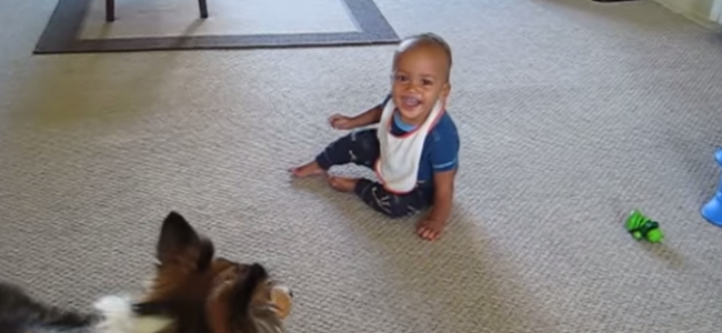 Ten uroczy film dowodzi, że psy są inteligentne i kochają dzieci