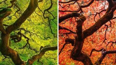 Lato i jesień w tych samych miejscach. Zobacz, jak razem z porami roku zmienia się świat! :)