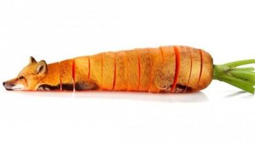 Już nigdy nie będę patrzył na marchewkę w ten sam sposób! WOW!