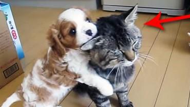 Ten kot potrafi zachować naprawdę stoicki spokój. Nawet ja bym tak nie potrafił!