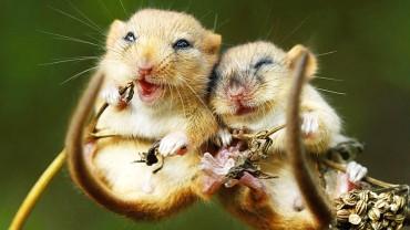 Boisz się myszy? Zapewniamy, że nie są one takie straszne!