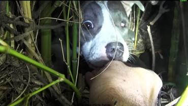 Zostali wezwani do chorego psa. Na miejscu czekała na nich niespodzianka!