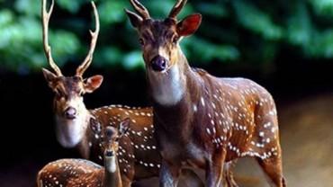 10 zwierzęcych zdjęć rodzinnych. Zobacz, jak zwierzaki przywiązują się do swoich pociech!