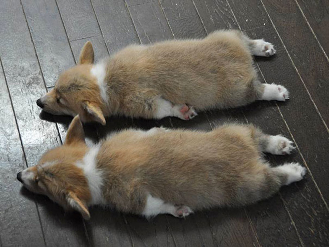 20 zwierzaków-bliźniaków, dzięki którym uśmiechniesz się dwa razy szerzej niż zwykle :)