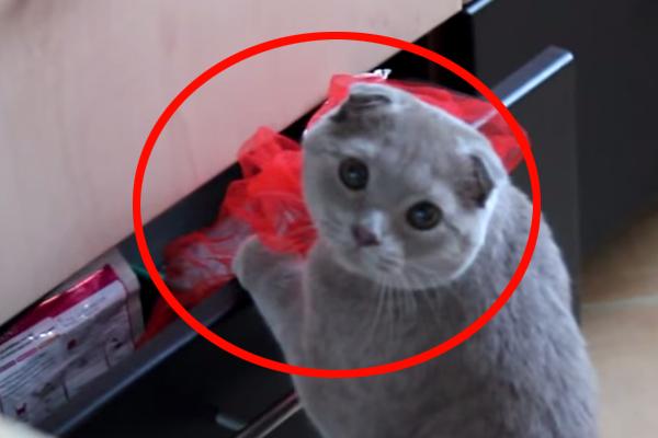 Ten kot został przyłapany na gorącym uczynku. To, co stało się później, rozbawiło mnie do łez!