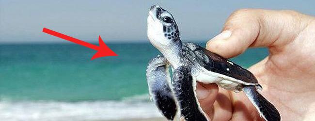 Tych 25 maleńkich zwierząt mieści się... na palcu!