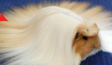 20 zwierząt z majestatycznym włosiem. Zobacz koniecznie!
