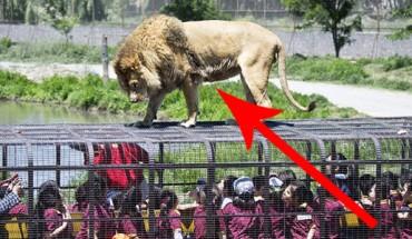 Odważylibyście się pójść do takiego, dzikiego zoo? Szok!!!