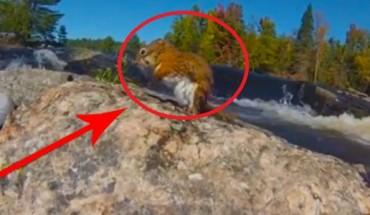Ta wiewiórka była uwięziona na kamieniu pośrodku rzeki! Znalazł się jednak śmiałek, który ją uratował!