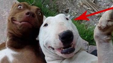 Tych 28 zwierząt wie, jak pozować do selfie!