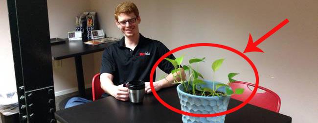 Kobieta poprosiła znajomego o opiekę nad swoją rośliną. Efekt tej opieki jest zdumiewający!