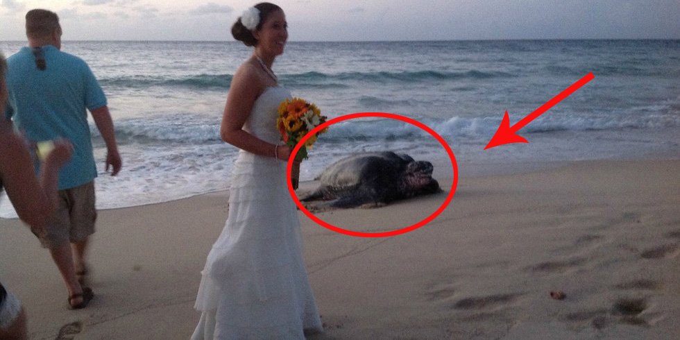 Podczas ich przyjęcia weselnego wydarzyło się coś niesamowitego!