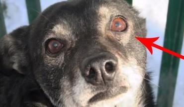 Nikt nie zwraca uwagi na stare psy przebywające w schroniskach! Jednak czasem zdarza się CUD!