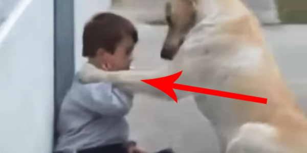 Ten pies po raz pierwszy spotkał dziecko z zespołem Downa! Jego zachowanie jest niezwykłe!