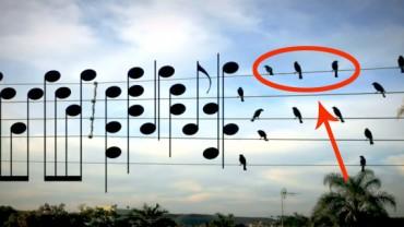 A gdyby tak ptaki zamienić w nuty….