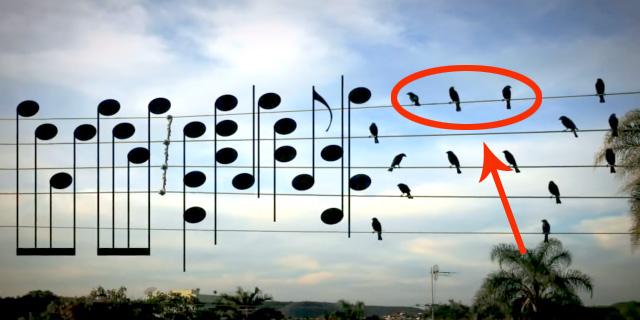 A gdyby tak ptaki zamienić w nuty....