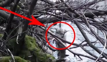 Znaleźli wyziębionego wilka w lodowatym potoku! Bez wahania ruszyli z pomocą!