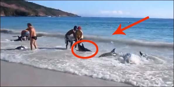 Oni wcale nie chcą skrzywdzić delfinów. Sprawdź, co się tam stało!