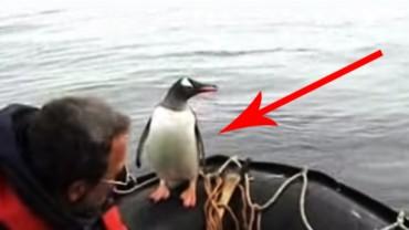 To co zrobił ten pingwin zaskoczyło wszystkich! Zobaczcie, co wymyślił, aby się uratować!