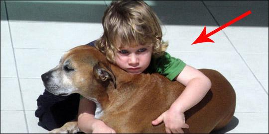 Reakcja 6-letniego chłopca na śmierć jego psa jest niebywała!