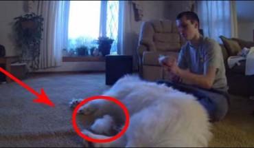 Ten facet postanowił wyczesać swojego psa. Nie spodziewał się jednak takiego finału!
