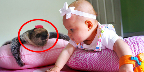 Ta pięciomiesięczna dziewczynka ma niezwykłego przyjaciela! Zobacz, kto skradł jej serce!