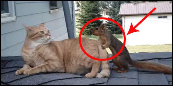 Ta wiewiórka i kot świetnie się razem bawią. Zobaczcie koniecznie!