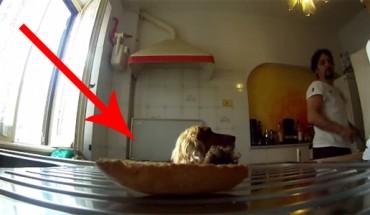 Mężczyzna zostawił na stole w kuchni suchy kawałek chleba. Reakcja psa bawi do łez!