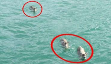 Wypłynęli na wycieczkę łodzią… Nie spodziewali się, że znajdą w wodzie coś takiego!