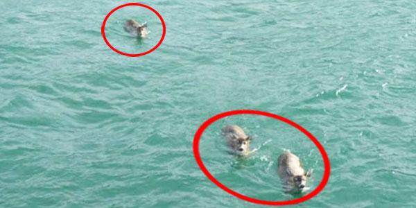 Wypłynęli na wycieczkę łodzią... Nie spodziewali się, że znajdą w wodzie coś takiego!