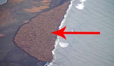 Myślałam, że to zwykła plaża, ale gdy powiększyłam fotografię… To takie smutne.